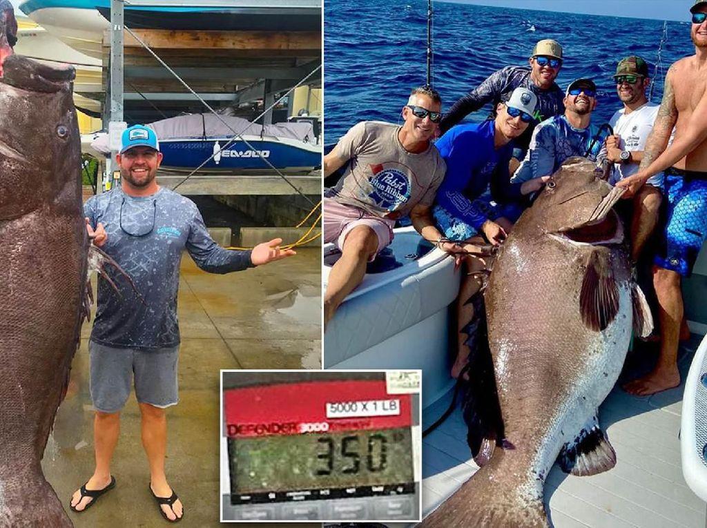 Berhasil Ditangkap! Ikan Kerapu 158 Kg Berusia 50 Tahun