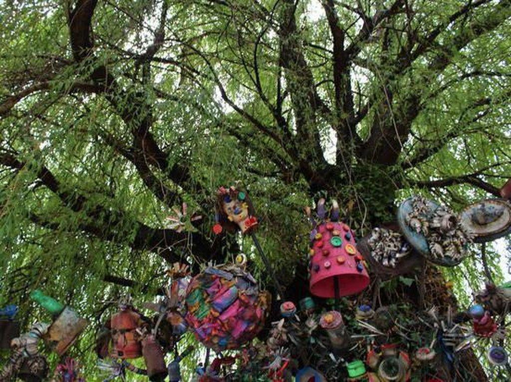Selain di Jember, Ada Juga Pohon Menangis di Amerika