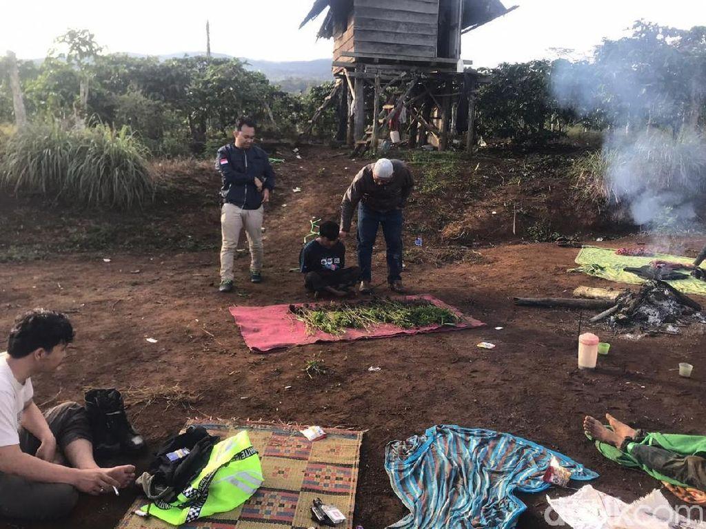 Polisi Temukan 3 Hektare Ladang Ganja di Hutan Lindung Pagaralam