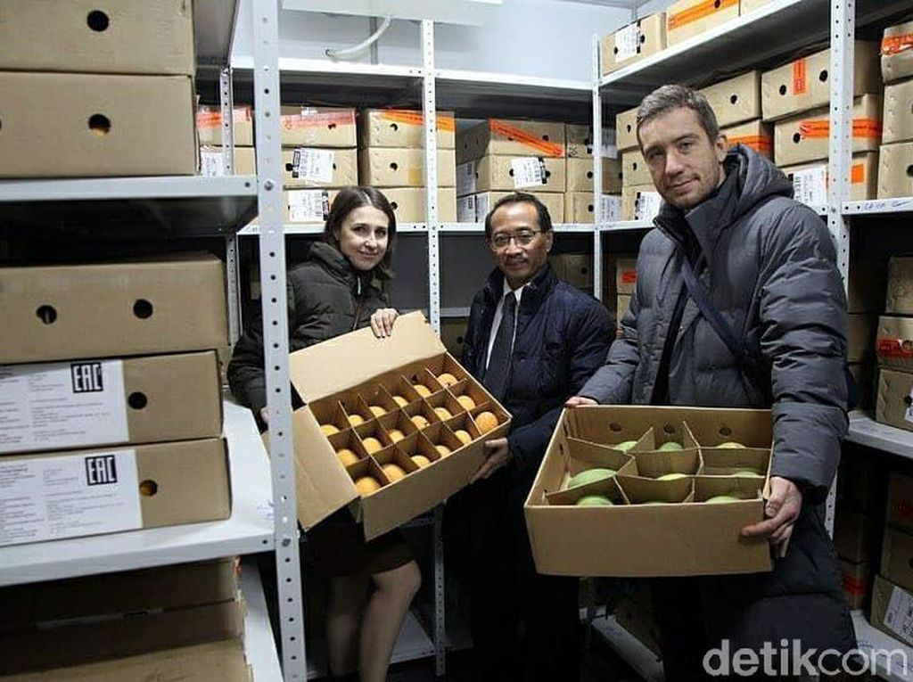 Mangga Gedong Gincu Sumedang Tembus Pasar Rusia