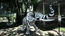 Wisatawan di Solo Protes: Patung Gajah Kok Kayak Zebra?