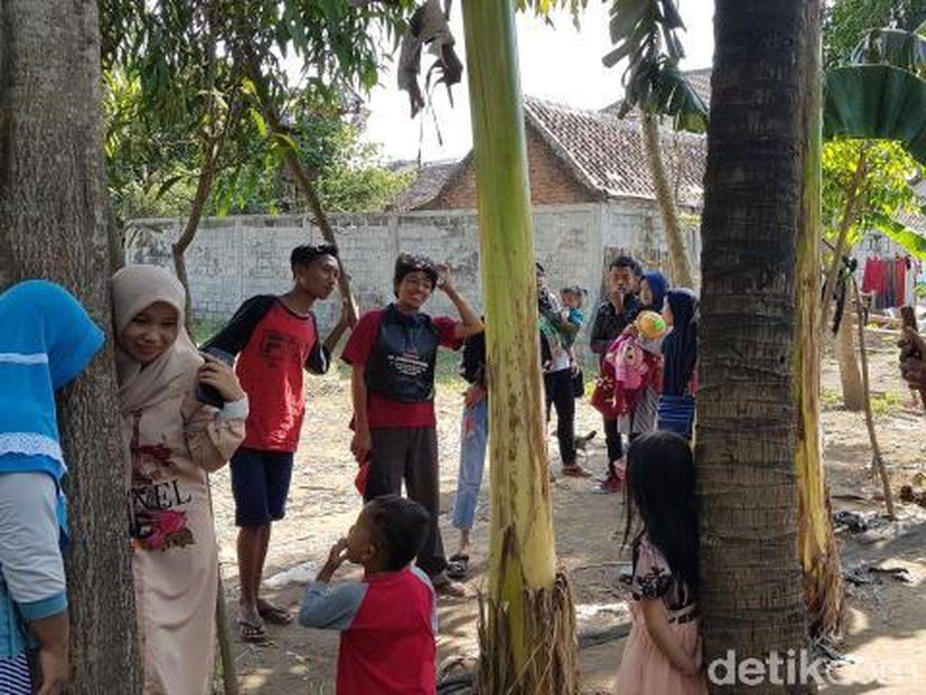 Pro Kontra Pohon Menangis di Jember, Ini Kesaksian Keluarga Pemilik Lahan