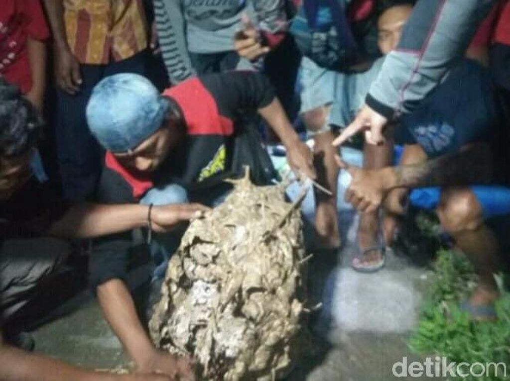 Satu Lagi Warga Klaten Dilaporkan Tewas Dikeroyok Tawon Vespa