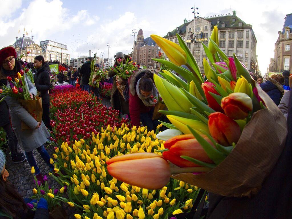 Foto: Cantiknya Warna-warni Bunga Tulip Bermekaran di Belanda