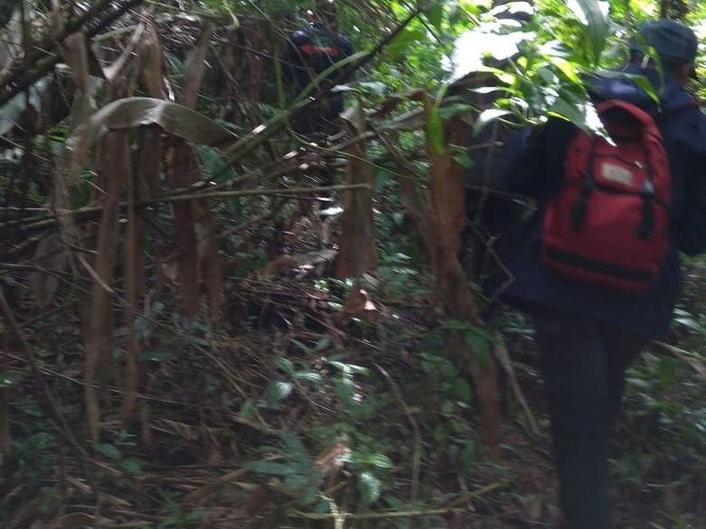 Video Kakek 87 Tahun Dievakuasi Setelah Tersesat di Hutan 10 Hari