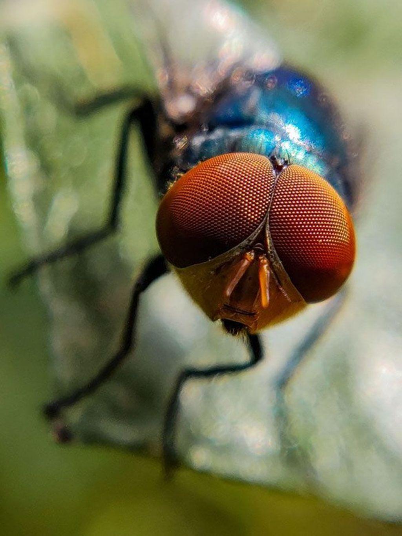Serangga jadi objek foto favorit Kumar. Menurutnya serangga adalah makhluk hidup yang bisa meningkatkan kecantikan alam. Foto: Sasi Kumar/Bored Panda