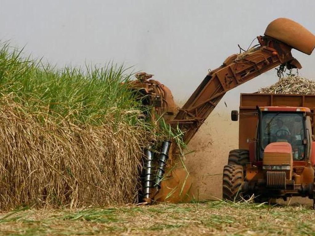 Cegah Konflik Sawit, Malaysia Tambah Impor Gula dari India