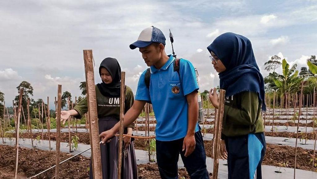 Berdayakan Petani Boyolali Melalui Pestisida Organik