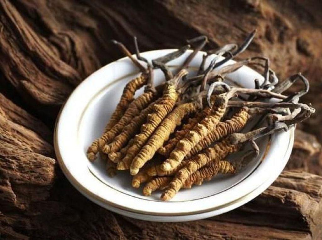 Fakta Jamur dari Himalaya: Ternyata Banyak Manfaatnya Loh!