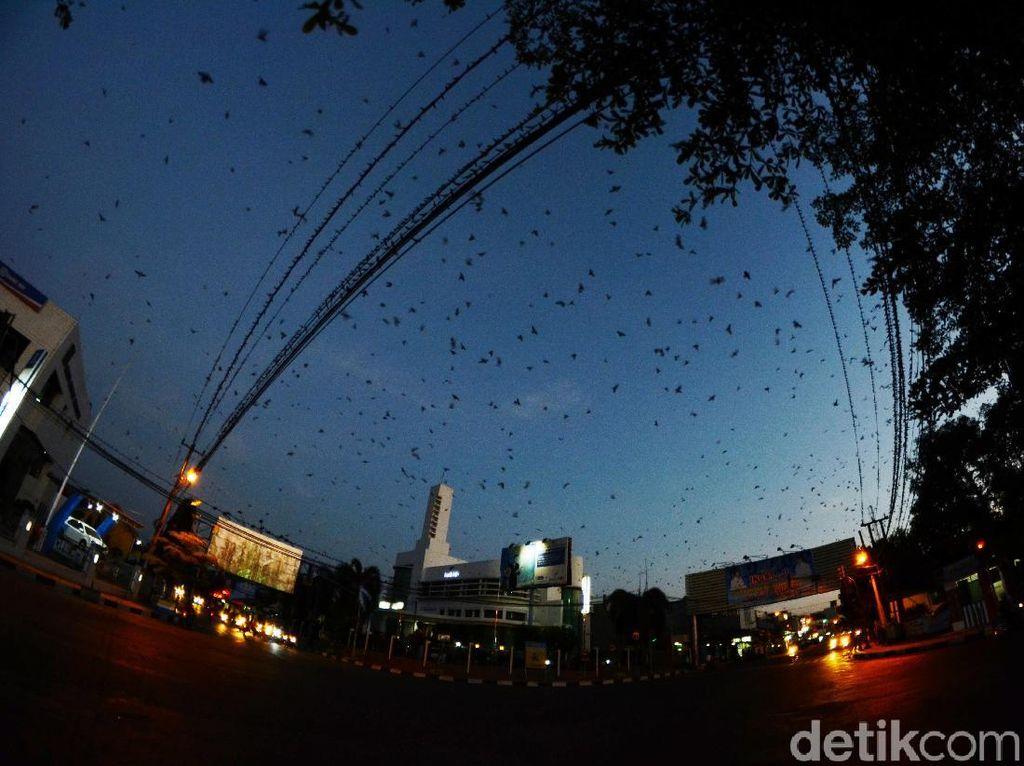 Kisah Ribuan Burung Pengungsi yang Bertamu di Alun-alun Kota Banjar