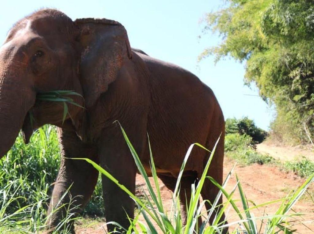 Video Gajah di Thailand Ditemukan Mati dengan Perut Penuh Sampah Plastik