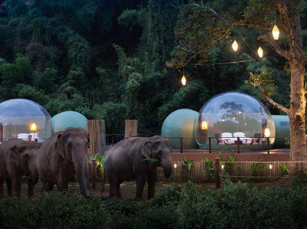 Penginapan Ini Ajak Kamu Tidur di Habitat Gajah