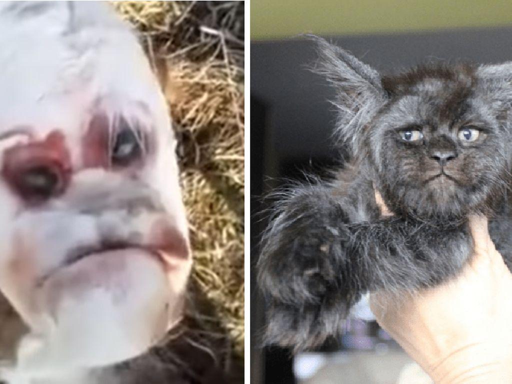 Hewan-hewan Berwajah Manusia yang Sudah Bikin Heboh