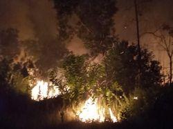 Semak Belukar Sekitar Kawasan Jelajah Gajah di Riau Terbakar