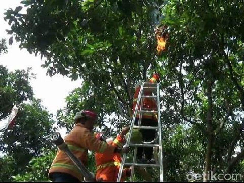 Tawon Endas Sengat Pengunjung Kantor Pajak Probolinggo, Sarangnya Dibakar