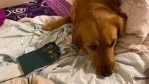Paspor Digigit Anjing Sampai Batal Liburan... ke Wuhan!