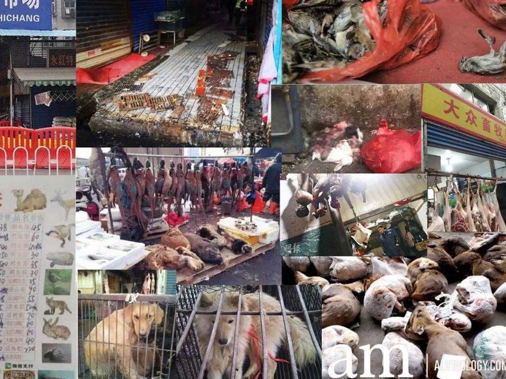 5 Fakta Pasar Seafood Huanan di Wuhan yang Disebut Asal Virus Corona