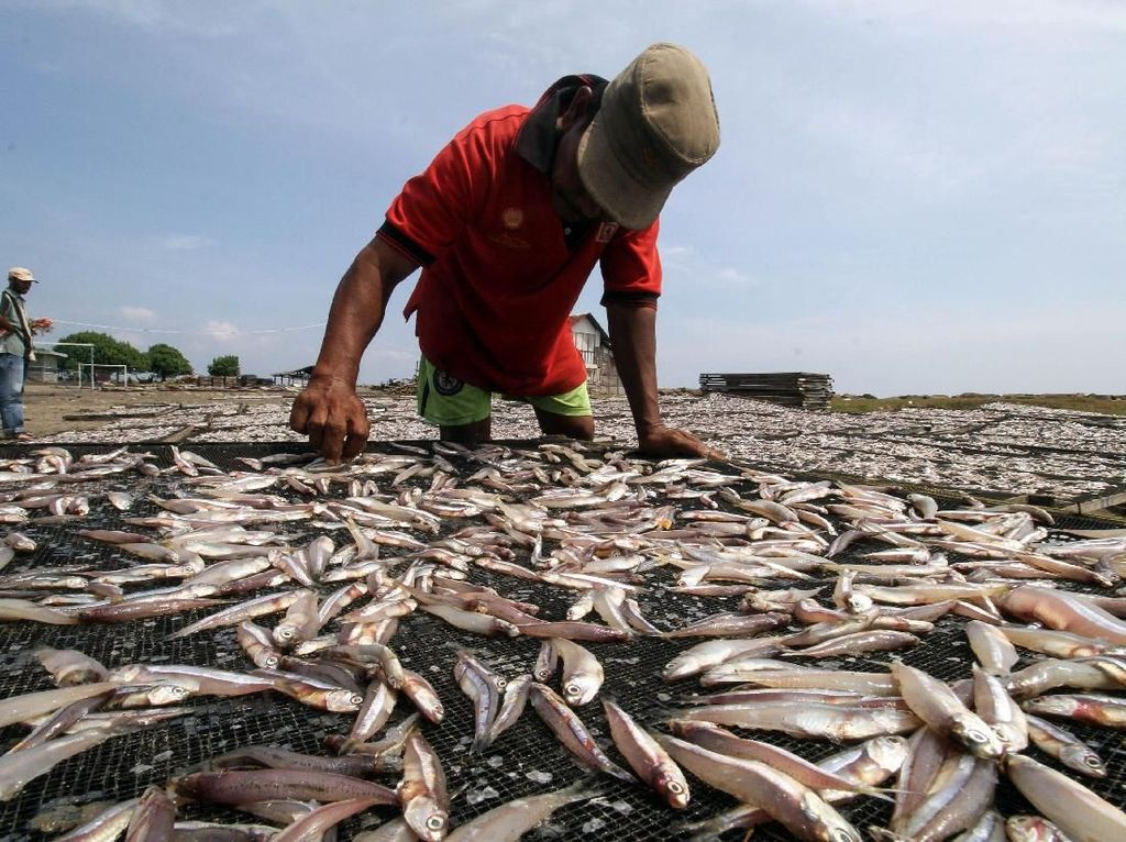 Pakai Jurus Ini, UMKM Perikanan Bisa Tembus Pasar Global