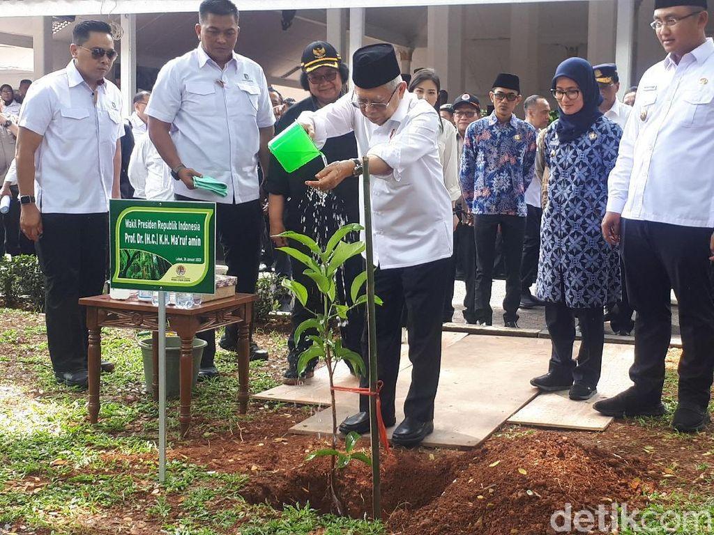 Pulihkan Lingkungan Lebak Pasca-longsor, Maruf Amin Tanam Bibit Jambu