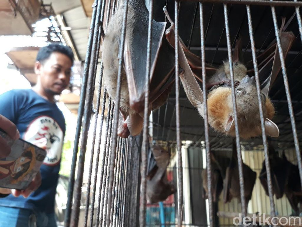 Antisipasi Virus Corona, Pemkot Solo Pantau Perdagangan Kelelawar