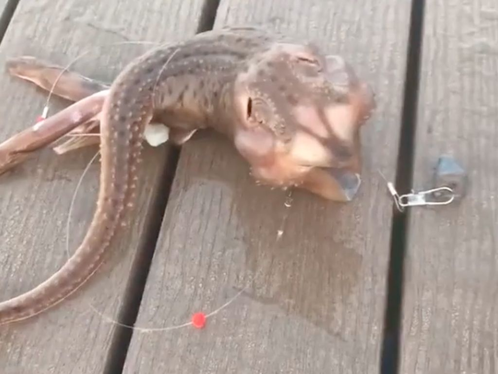 Heboh Nelayan Tangkap Ikan Alien, Netizen Kebingungan
