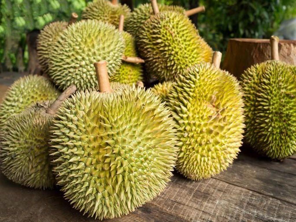 Kenyang Makan Durian di Sentra Durian Kalibata