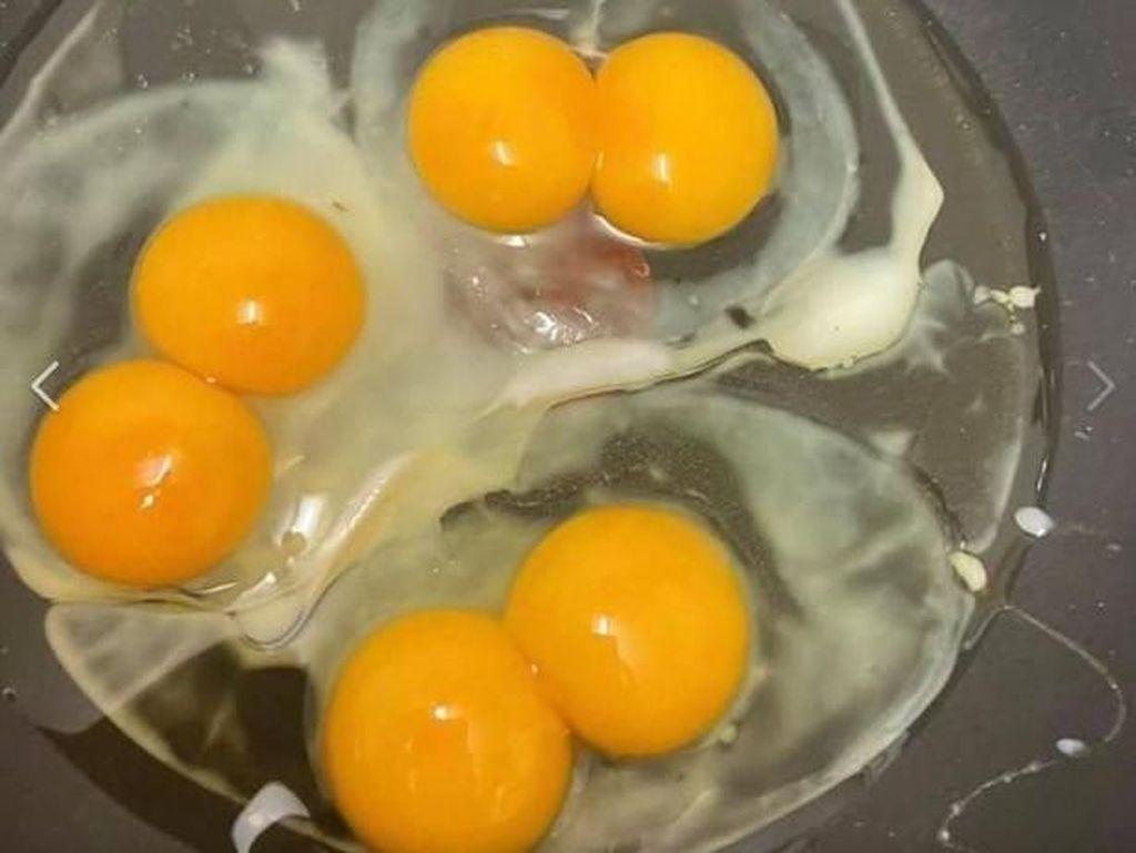 Kejadian Super Langka, Wanita Ini Temukan 7 Telur dengan Kuning Ganda