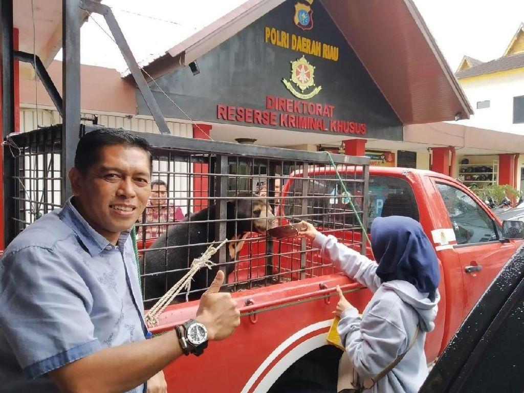 Polda Riau Sita 2 Ekor Beruang Madu dari Pasutri di Pelalawan