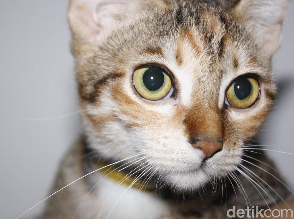 Kucing Ini Selamatkan Lansia yang Terjebak di Selokan