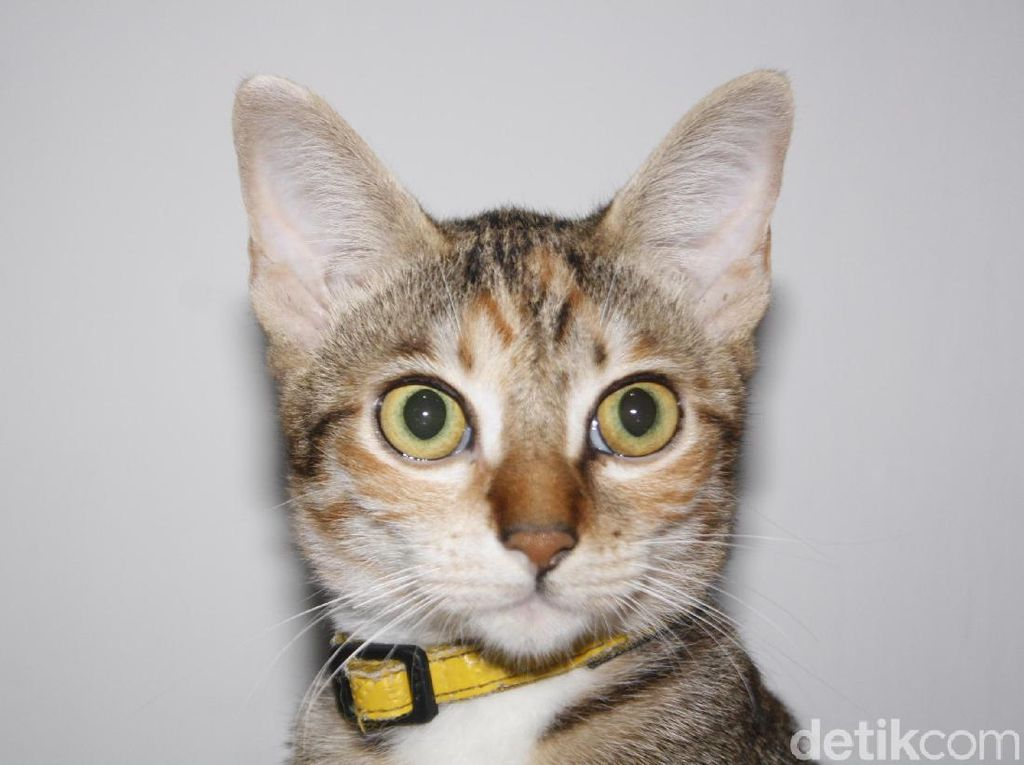 Dear Penyayang Kucing, Ini Dia Tips Agar Si Pus Tak Terjangkit Distemper