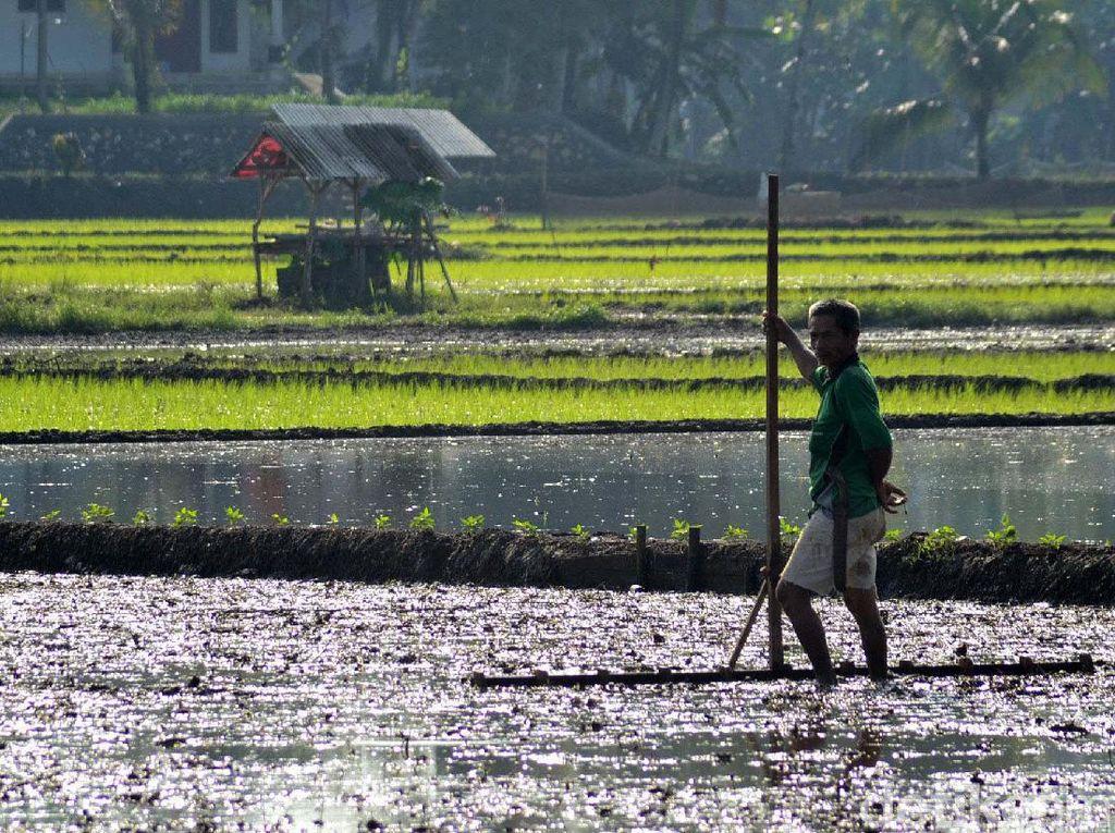Petani Bakal Dapat Bantuan Rp 600.000, Bagaimana Pengawasannya?