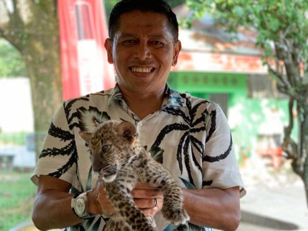 Anakan Leopard Sitaan Penyelundupan di Riau Mati
