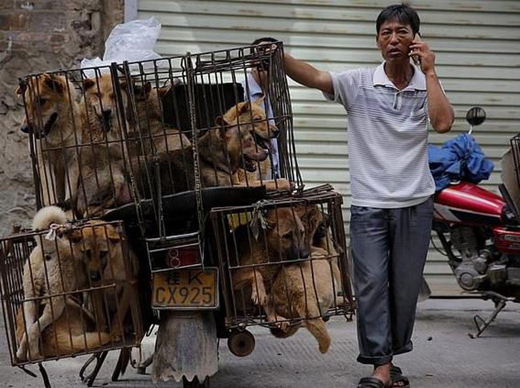 Hii..! Video Anjing Dipanggang Hidup-hidup di China Ini Dikecam Keras