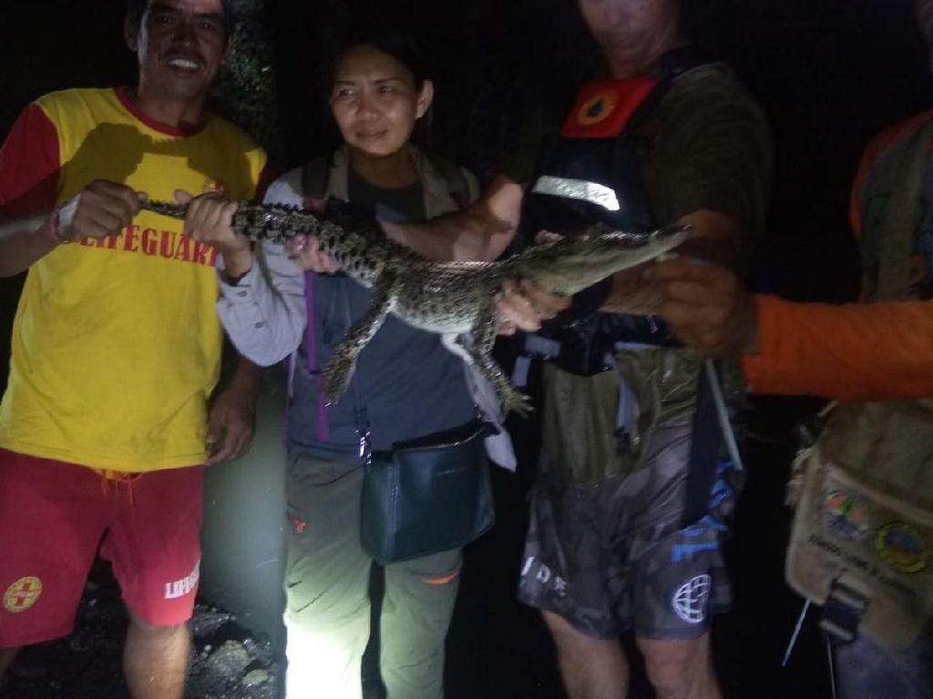 Anak Buaya di Sungai Denpasar yang Bikin Resah Warga Ditangkap