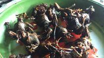 Virus Corona Mewabah, Kelelawar Bacem di Gunungkidul Ini Tetap Laris Manis