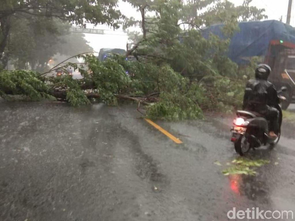 Angin Kencang Tumbangkan Pohon Besar di Pasuruan, Lalin Pantura Macet