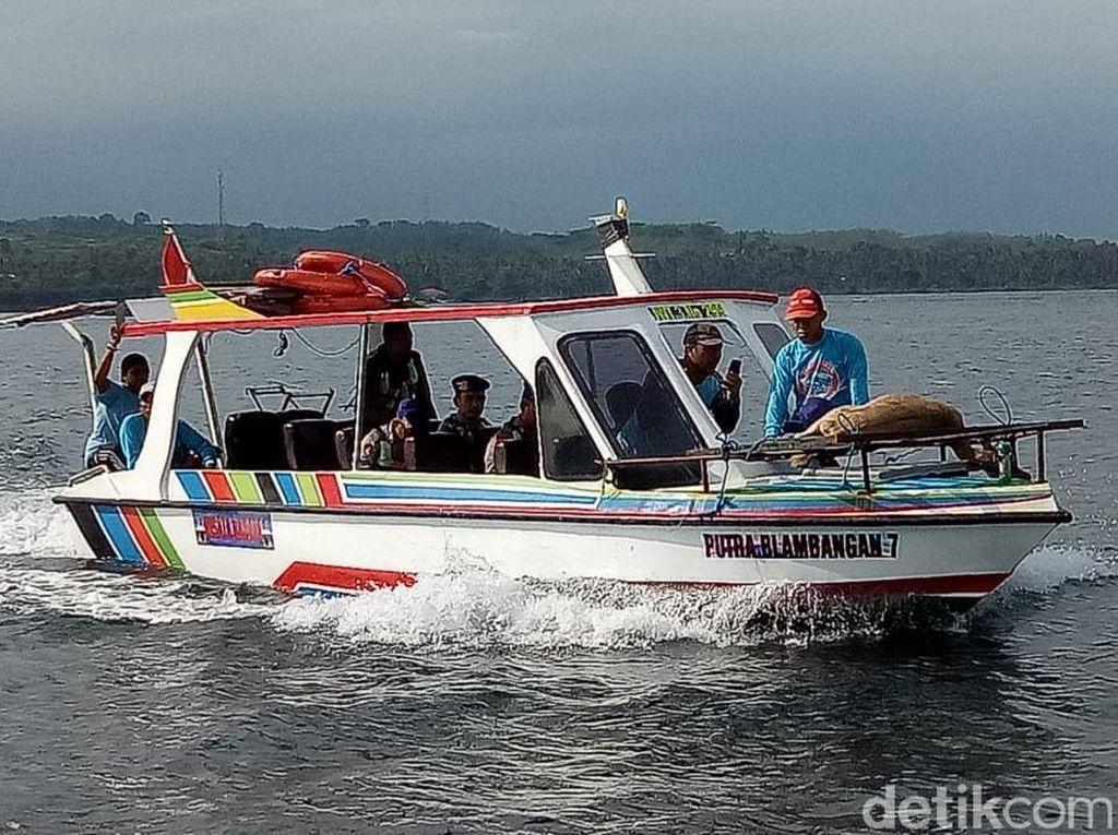 Begini Nasib Kijang yang Berenang dari Bali ke Banyuwangi