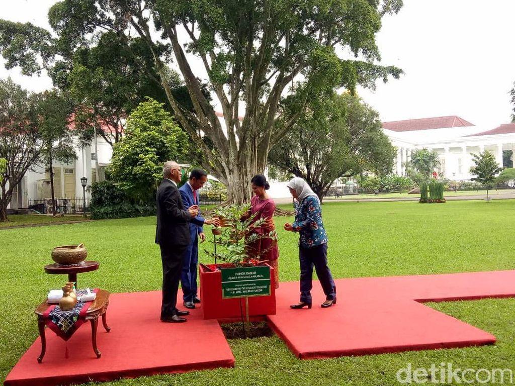 Jokowi dan Presiden Singapura Tanam Pohon Damar di Istana Bogor