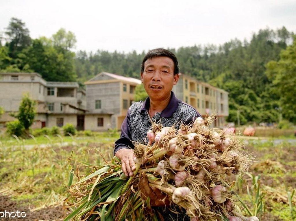 RI Rajin Impor Sayuran dari China