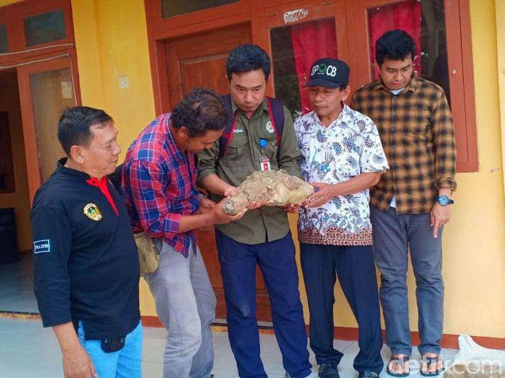 Tulang yang Ditemukan Warga Madiun Diduga Fosil Banteng dan Kudanil Purba