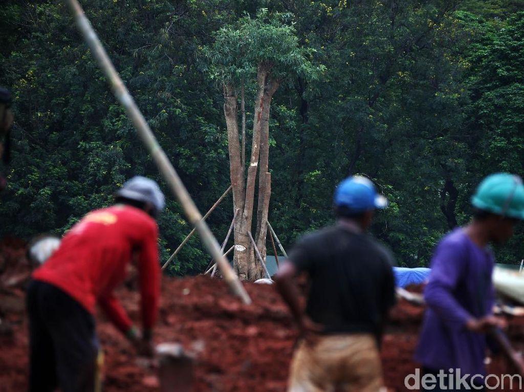 Video: Usai Gundul Akibat Revitalisasi, Monas Kini Ditanami Pohon Kembali