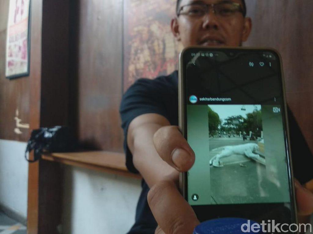 Patung Harimau Loncat, Wawali Kota Bandung: Belum Tahu, Saya Tanya Dinas