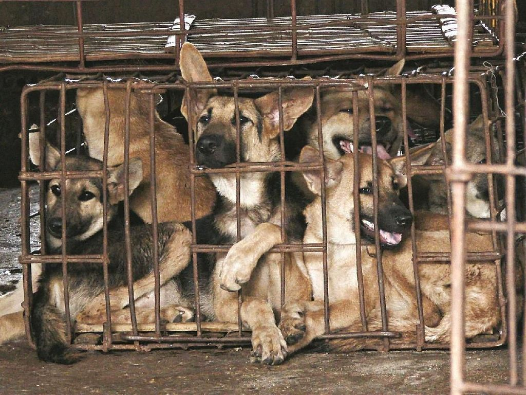 Anjing Gila Serang Permukiman Warga di Bone Sulsel, 5 Orang Luka