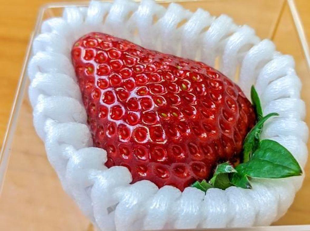 Wow! Stroberi Jepang Ini Harganya Rp 134 Ribu per Buah
