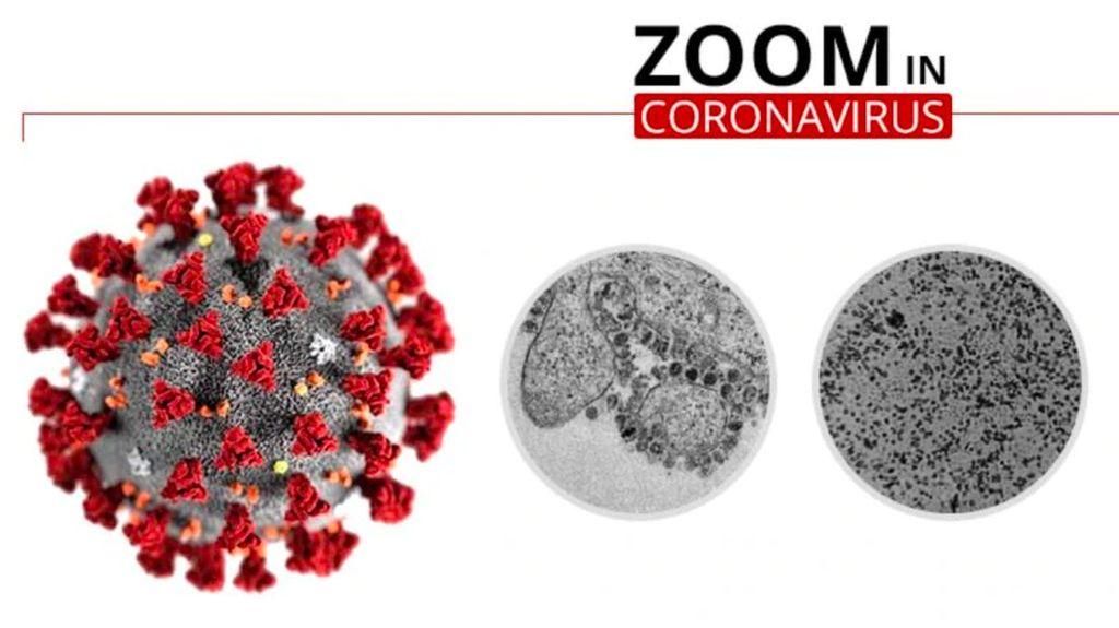 Wujud dari Dekat Virus Corona yang Renggut Ratusan Nyawa