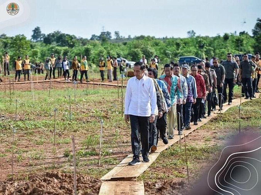 Peringati Hari Pers Nasional, Jokowi Resmikan Hutan Baru