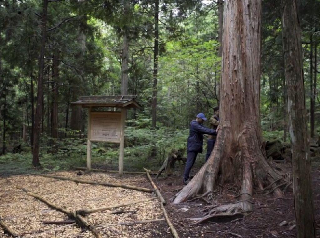 Begini, Nih, Kebiasaan Orang Jepang Ngobrol dengan Pohon