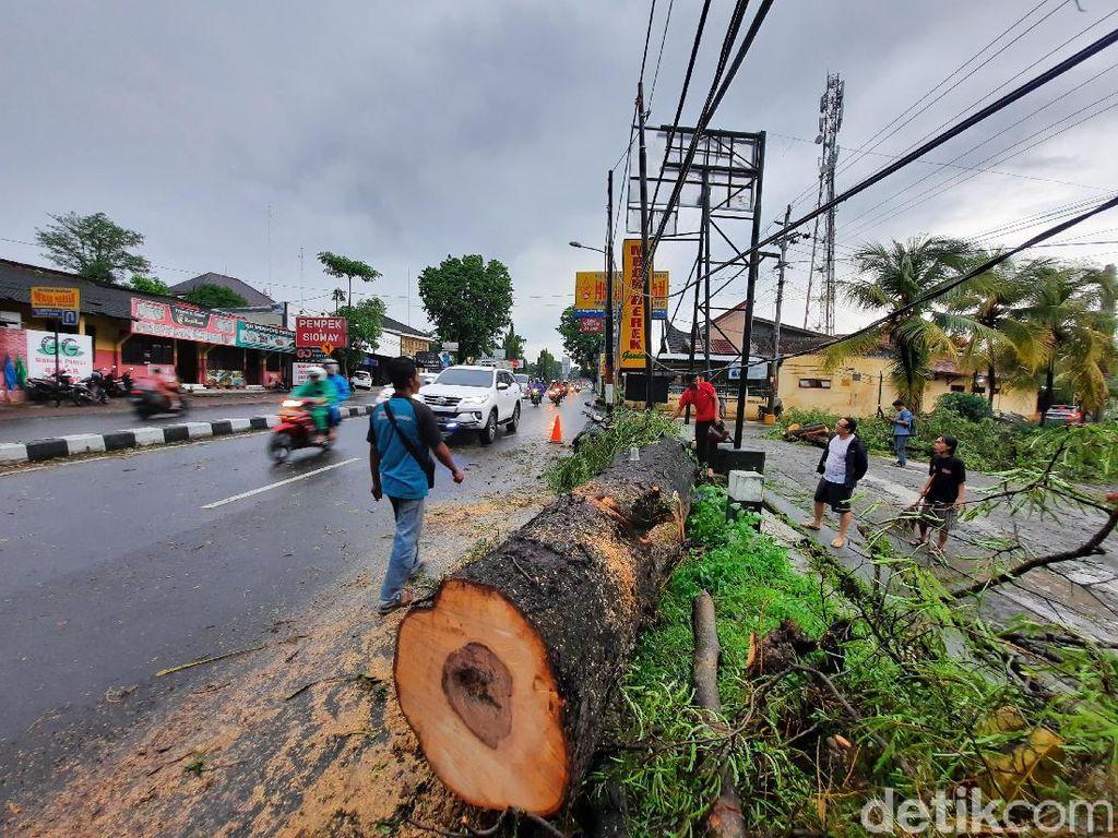 Pohon Tumbang di Sleman, Timpa Rumah dan Sempat Tutup Jalan Magelang