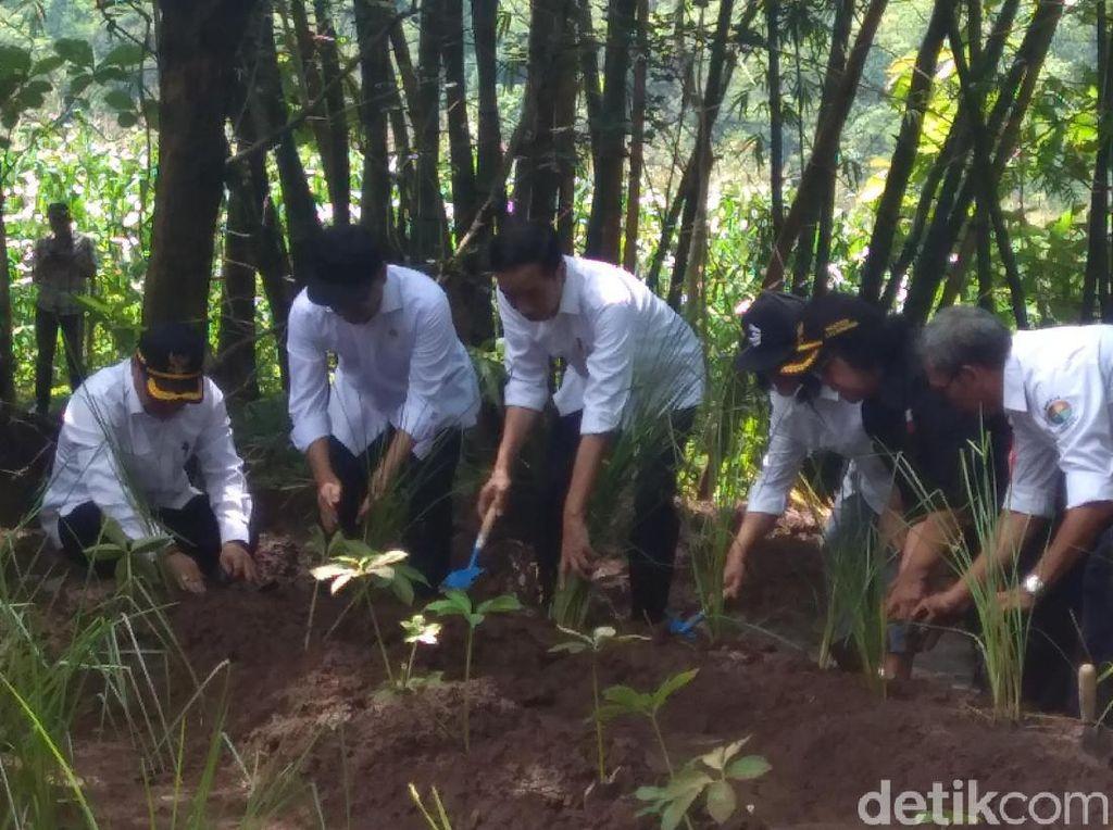 Tanam Vetiver di Wonogiri, Jokowi Juga Kampanyekan Agroforestri