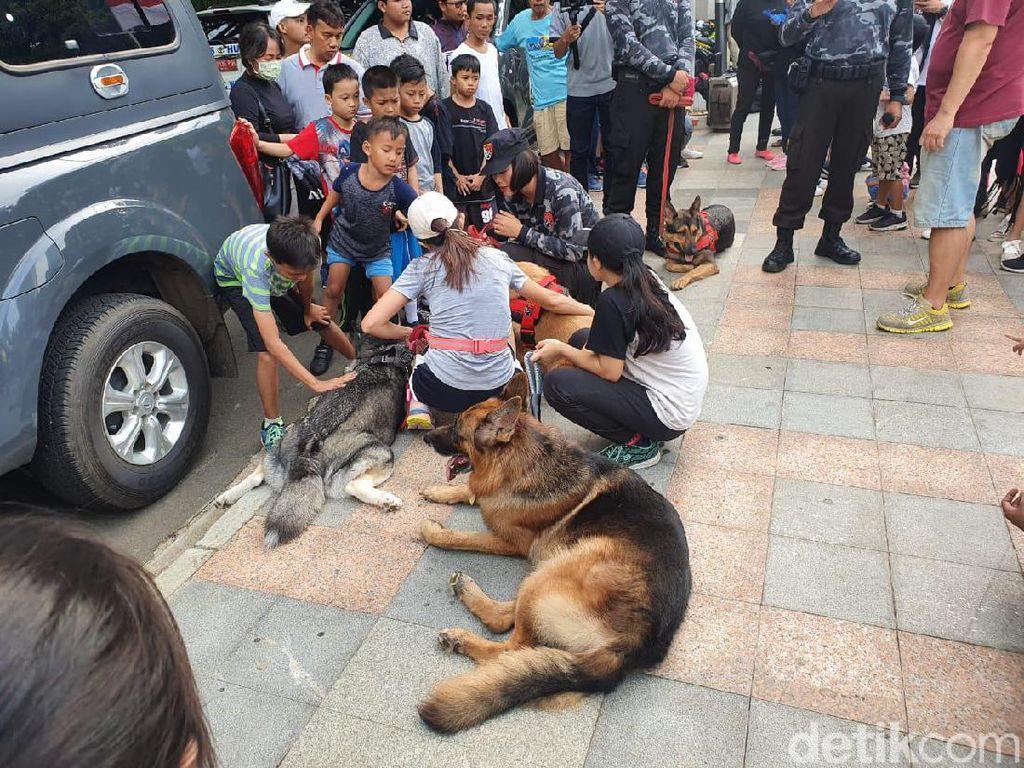 Atraksi Anjing Pelacak-Kuda Pengendali Massa Curi Perhatian di CFD